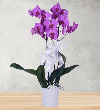 Seramik Vazoda Mor Orkide(Çift Dal)