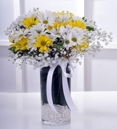 Cam Vazoda Sarı Beyaz Papatya