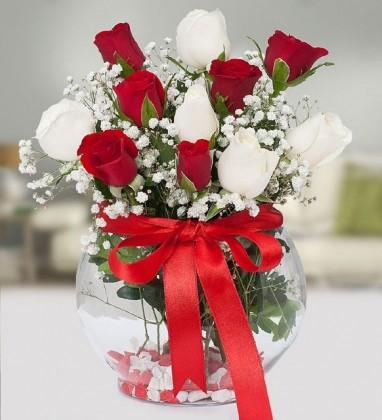 Kırmızı Beyaz Güller