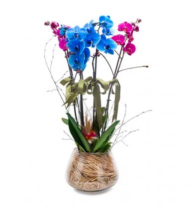 Camda Mavi Pembe Saksı Orkideler