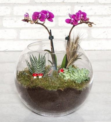 Fanusta Midi Orkide Sukulent Tasarımı