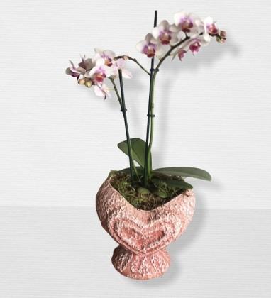 Renkli Mini Orkide Tasarımı